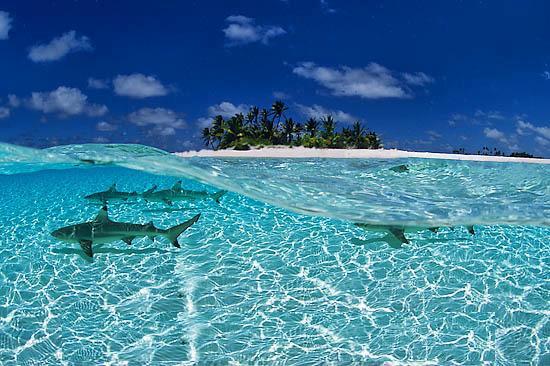Maldivi pocitnice